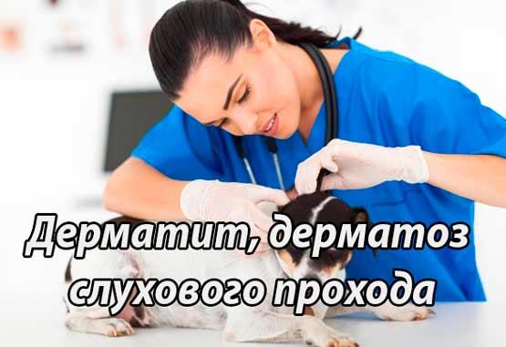 Дерматит, дерматоз слухового прохода у собак и кошек (наружный отит)