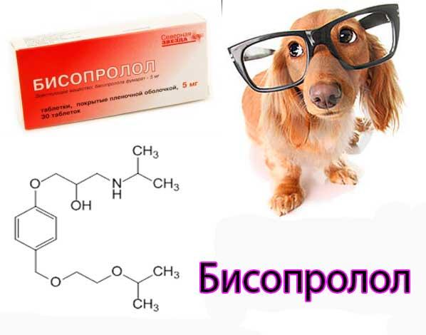 атропина сульфат инструкция по применению для животных - фото 7