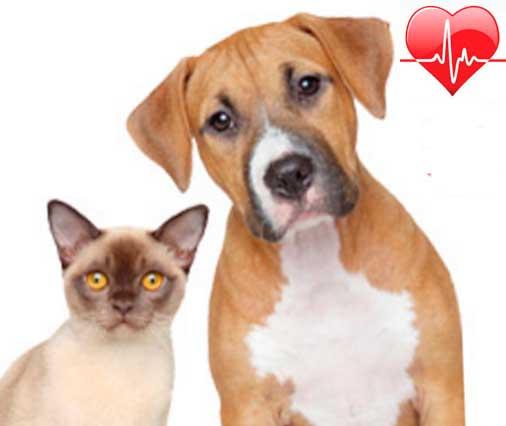 Современные принципы терапии собак, кошек и других мелких животных с застойной сердечной недостаточностью (ХСН)