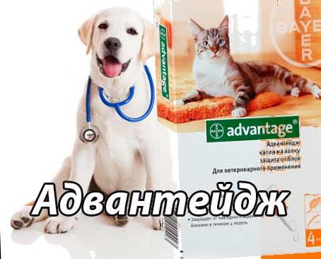 Advantage инструкция по применению для кошек