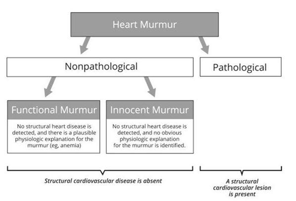 Номенклатура патологических и непатологических сердечных шумов