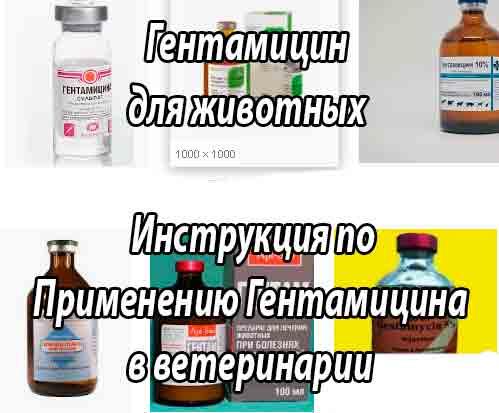 Инструкция по применению гентамицина в ветеринарии
