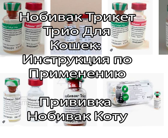 Нобивак Трикет Трио: Инструкция по применению кошкам (состав, показания и противопоказания, доза, иммунитет, кратность введения)