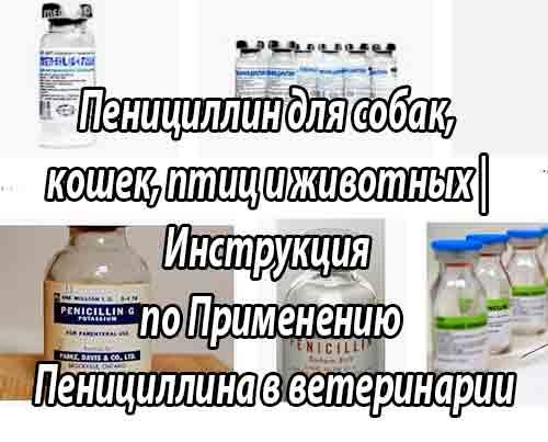 Инструкция по применению пенициллина в ветеринарной медицине. Улучшите эффективность лечения на 300%