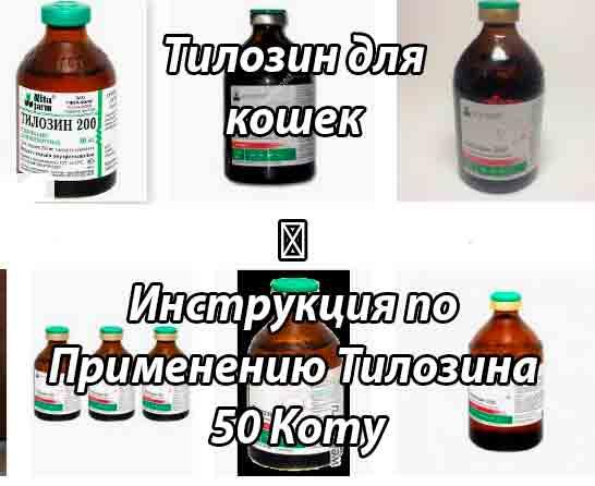 Инструкция по применению тилозина-50  у кошек.  Улучшите эффективность терапии на 200%