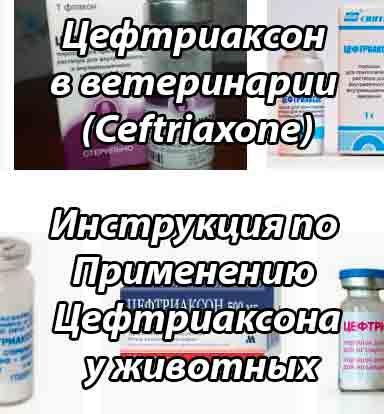 Инструкция по применению цефтриаксона в ветеринарии (Ceftriaxone). Улучшите эффективность терапии на 150%