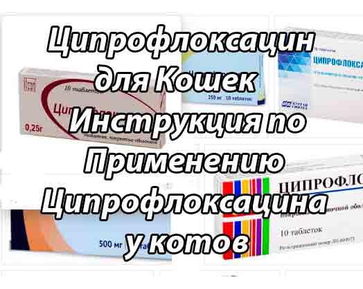 Инструкция по применению таблеток ципрофлоксацина для кошек