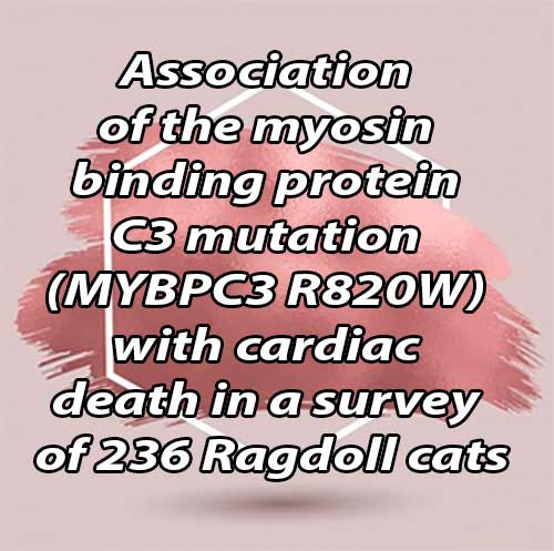 Association of the myosin binding protein C3 mutation (MYBPC3 R820W) with cardiac death in a survey of 236 Ragdoll cats
