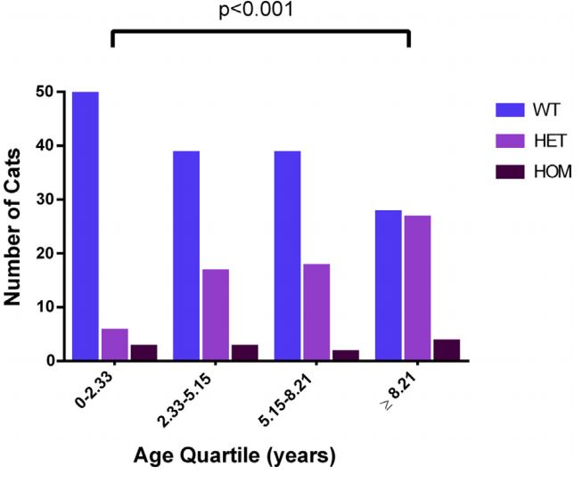 Bar chart showing the number of cats of each genotype in different age quartiles