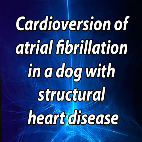 Cardioversion of atrial fibrillation in a dog with structural heart disease using an esophageal-right atrial lead configuration