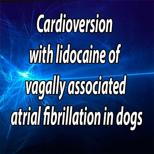 Cardioversion with lidocaine of vagally associated atrial fibrillation in two dogs