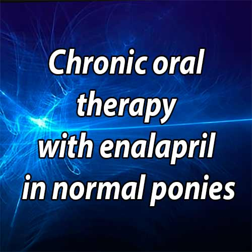 Chronic oral therapy with enalapril in normal ponies