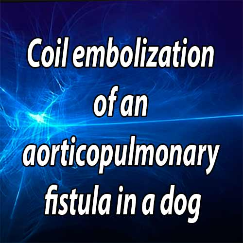 Coil embolization of an aorticopulmonary fistula in a dog