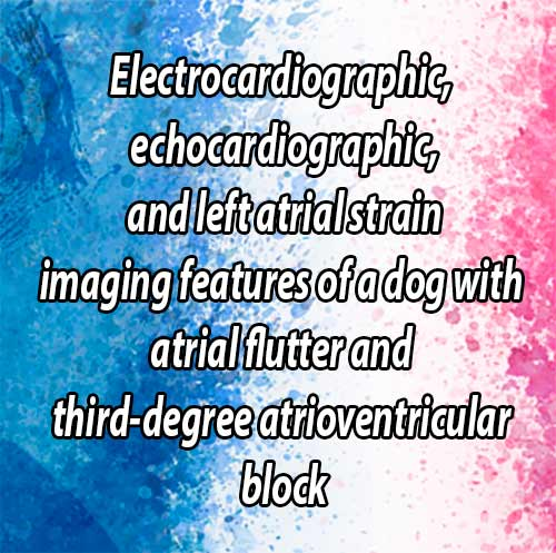 Electrocardiographic, echocardiographic, and left atrial strain imaging features of a dog with atrial flutter and third-degree atrioventricular block