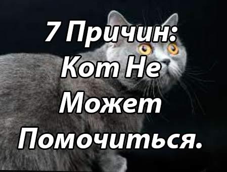 Задержка мочеиспускания кошек у кошек: настоящая чрезвычайная ситуация